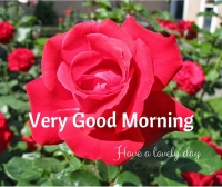 Have a Lovely day image for whatsapp