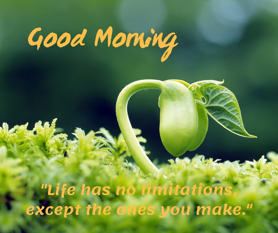 Life has no limitation good morning photo