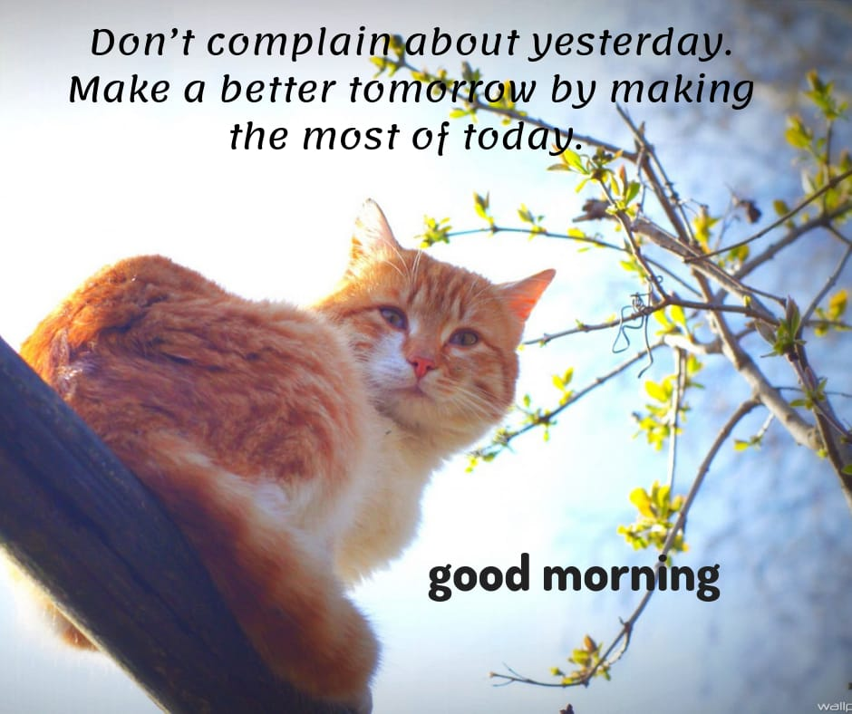 good morning wishes with quotes