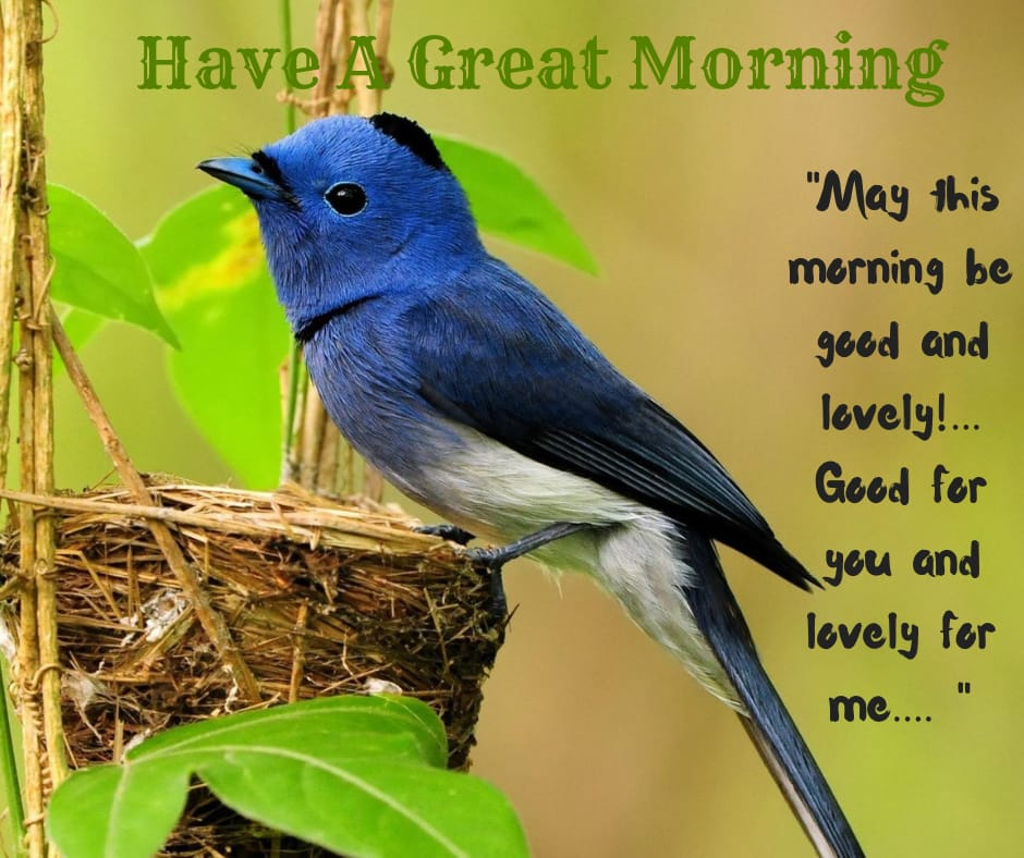 may this morning lovely and good image