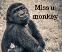 miss u monkey images for fb post